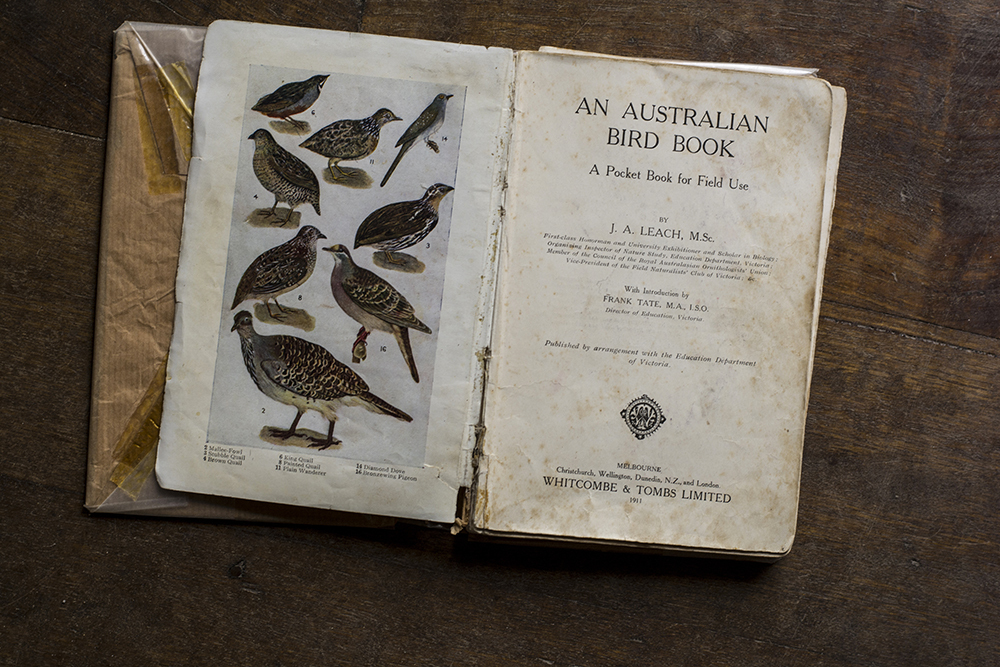 9Rachel_Mounsey_Birds_-book-_Titlepage_web